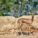 animals-al-ain-zoo-mygraciousart (1)
