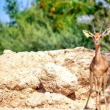 animals-al-ain-zoo-mygraciousart (2)