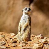 animals-al-ain-zoo-mygraciousart (3)