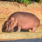 animals-al-ain-zoo-mygraciousart (5)